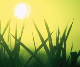 Sun&Grass